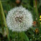 low-balls, kites, wind