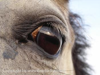 Lowis eye