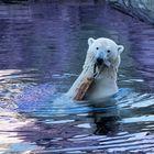 Loyd_Zoo am Meer