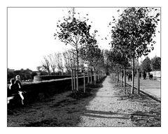 Lucca promenade