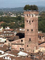 Lucca - Torre del Guinigi