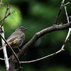 l'uccellino timido