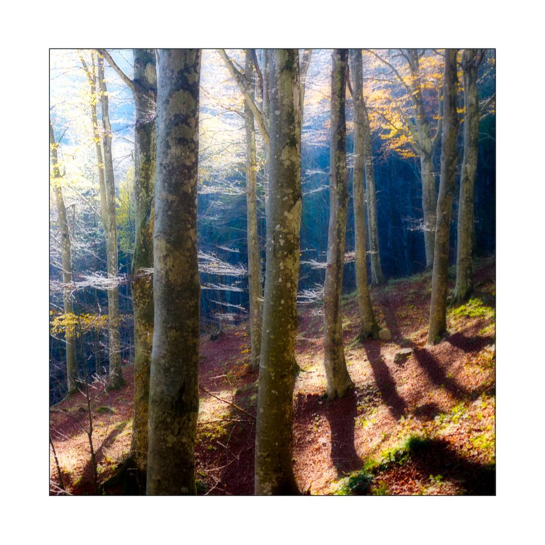 Luce fra gli alberi