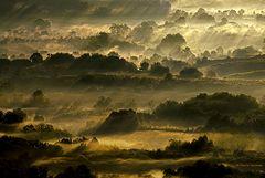 Luce sui boschi