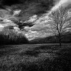 Luce sulla solitudine