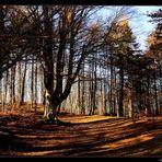 ..luci e ombre del bosco!..