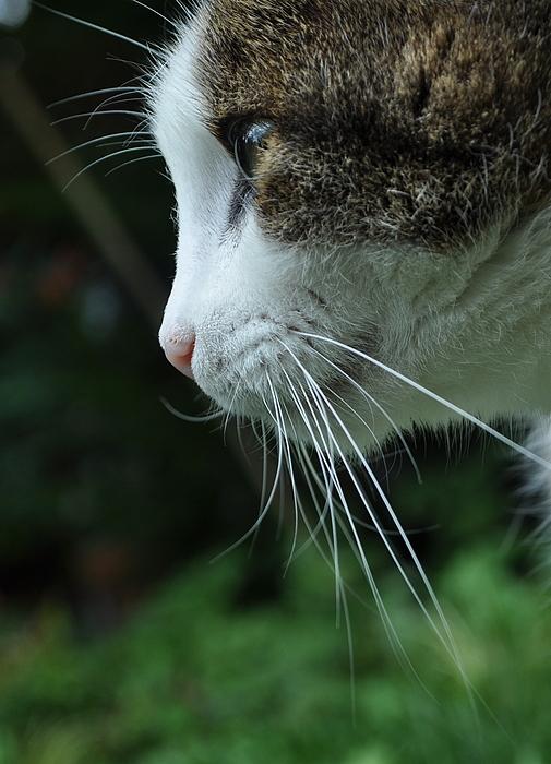 Lucies Blick ist immer verträumt......