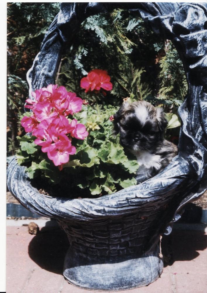 Lucky entdeckt die Blumenwelt