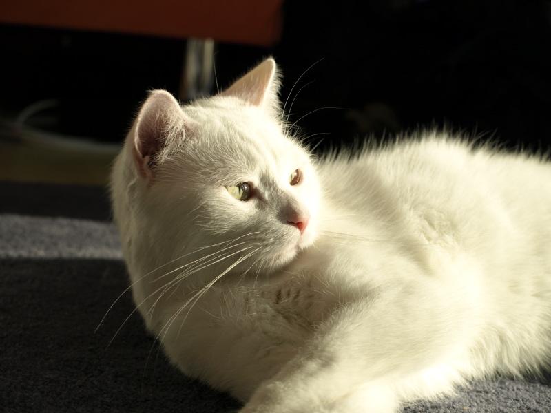 """""""Lucky"""" Katze"""