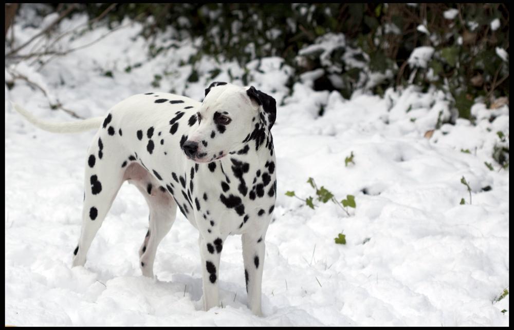 Lucky Luke im Schnee