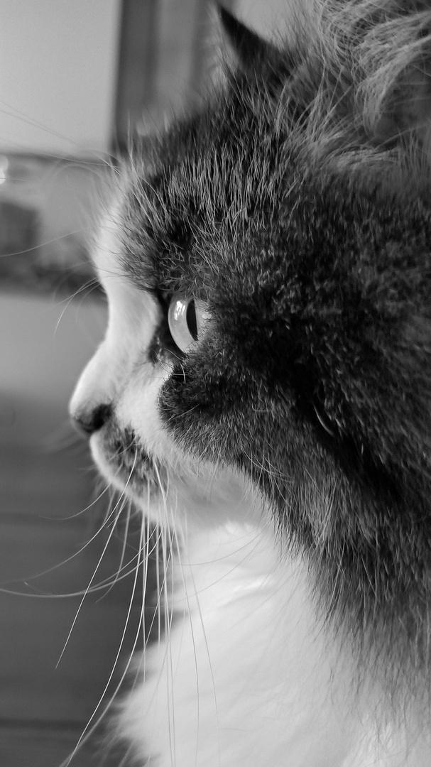 Lucy Foto & Bild | tiere, haustiere, katzen Bilder auf