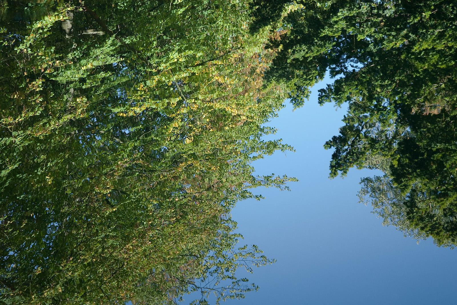 Ludwigslust 14: Blick in den Himmel in die Bäume durch das Wasser