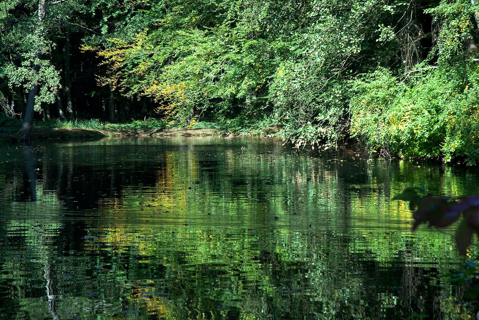 Ludwigslust 5: Ein kleiner Teich im Schloßpark mit Spiegelungen der Umgebung