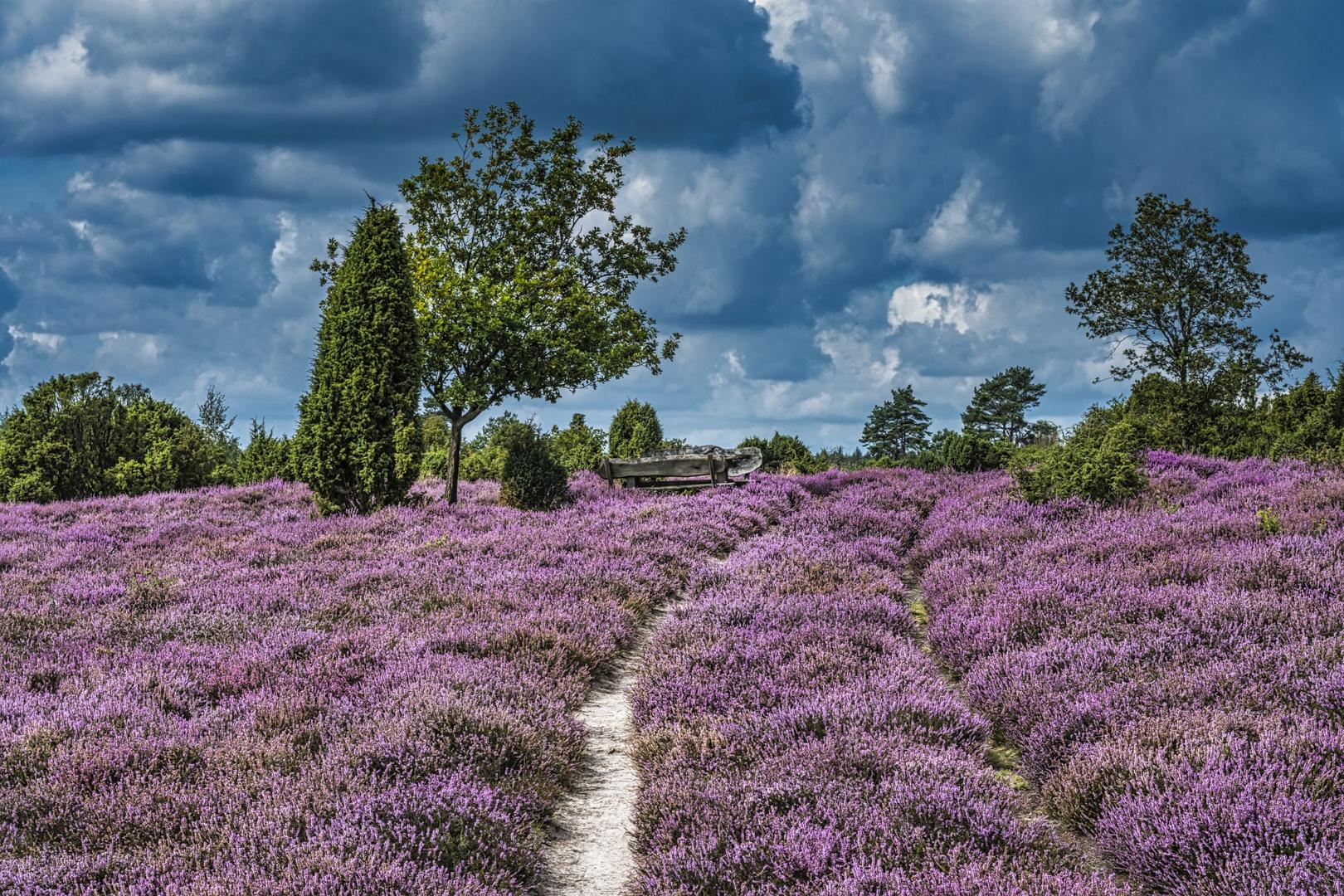 Lüneburger Heide 2019 (Ellerndorf)