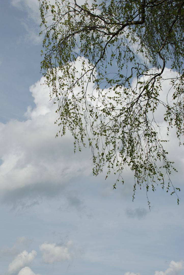 Luftig-leichte Birkenwelt im Frühlingskleid