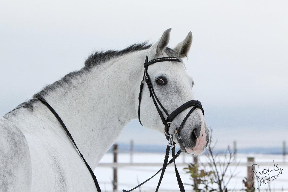 Lui, der weiße Riese