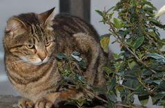 Lui è Romeo, il gatto Der Colosseo...