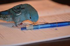* Luis macht Hausaufgaben *