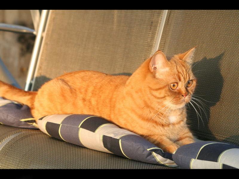 Luke - aber alle nennen ihn Garfield - warum nur?