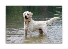< Luke – unser Wasserhund >