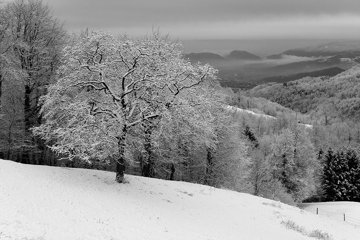 L'ultima neve di gennaio.