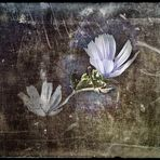 l'ultimo fiore dell'estate