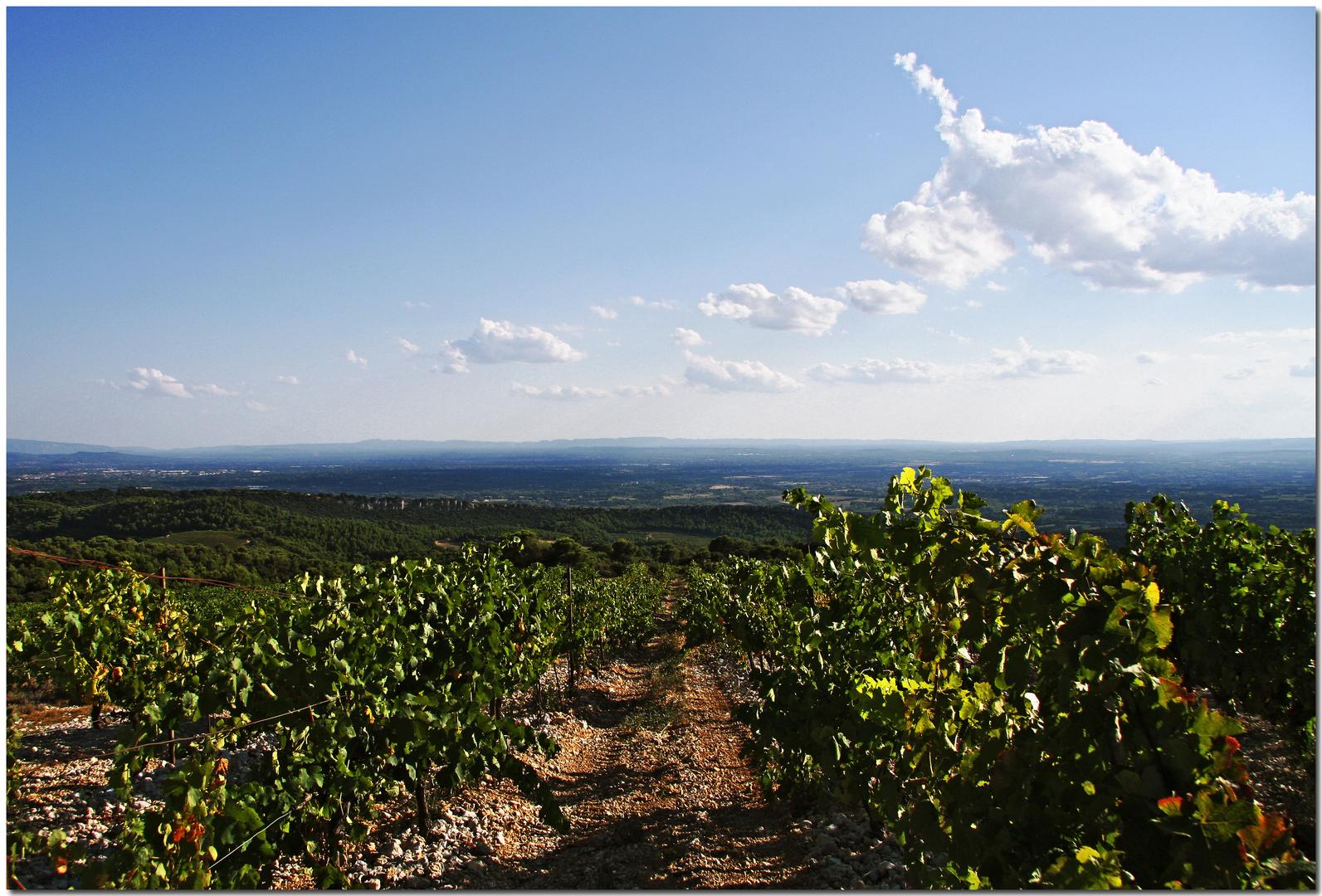 Lumière d'après-midi au-dessus des vignes du Lubéron