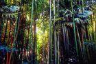 Lumières dans la bambouseraie