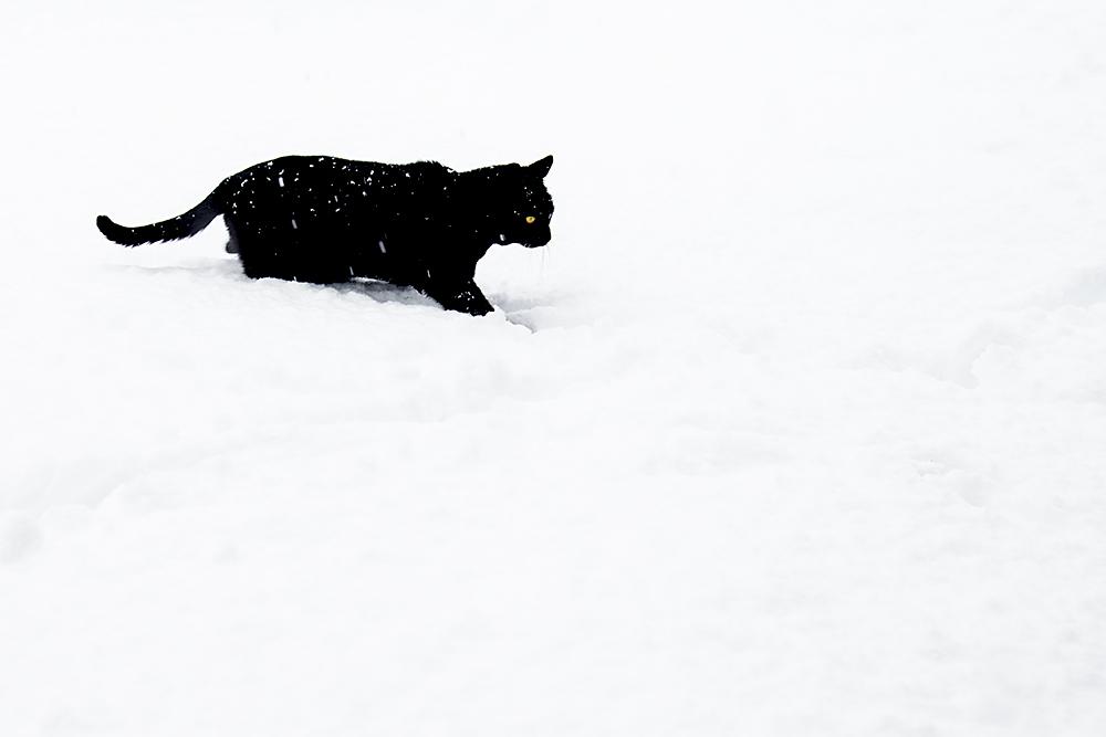 Lumpi mag keinen Schnee!