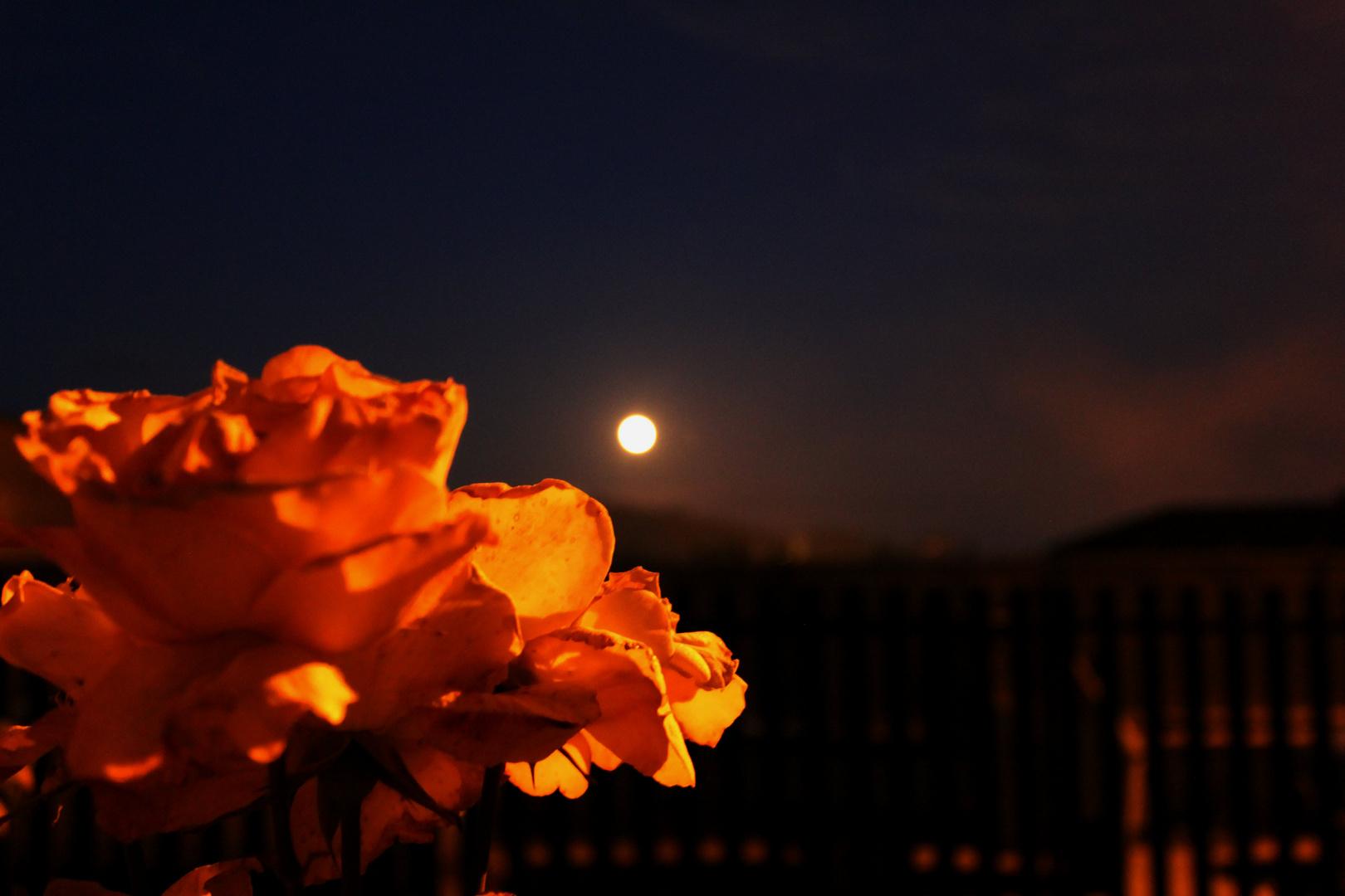 luna rose