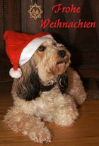 Luna wünscht der fc Frohe Weihnachten