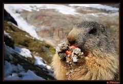 Lunch im Schnee