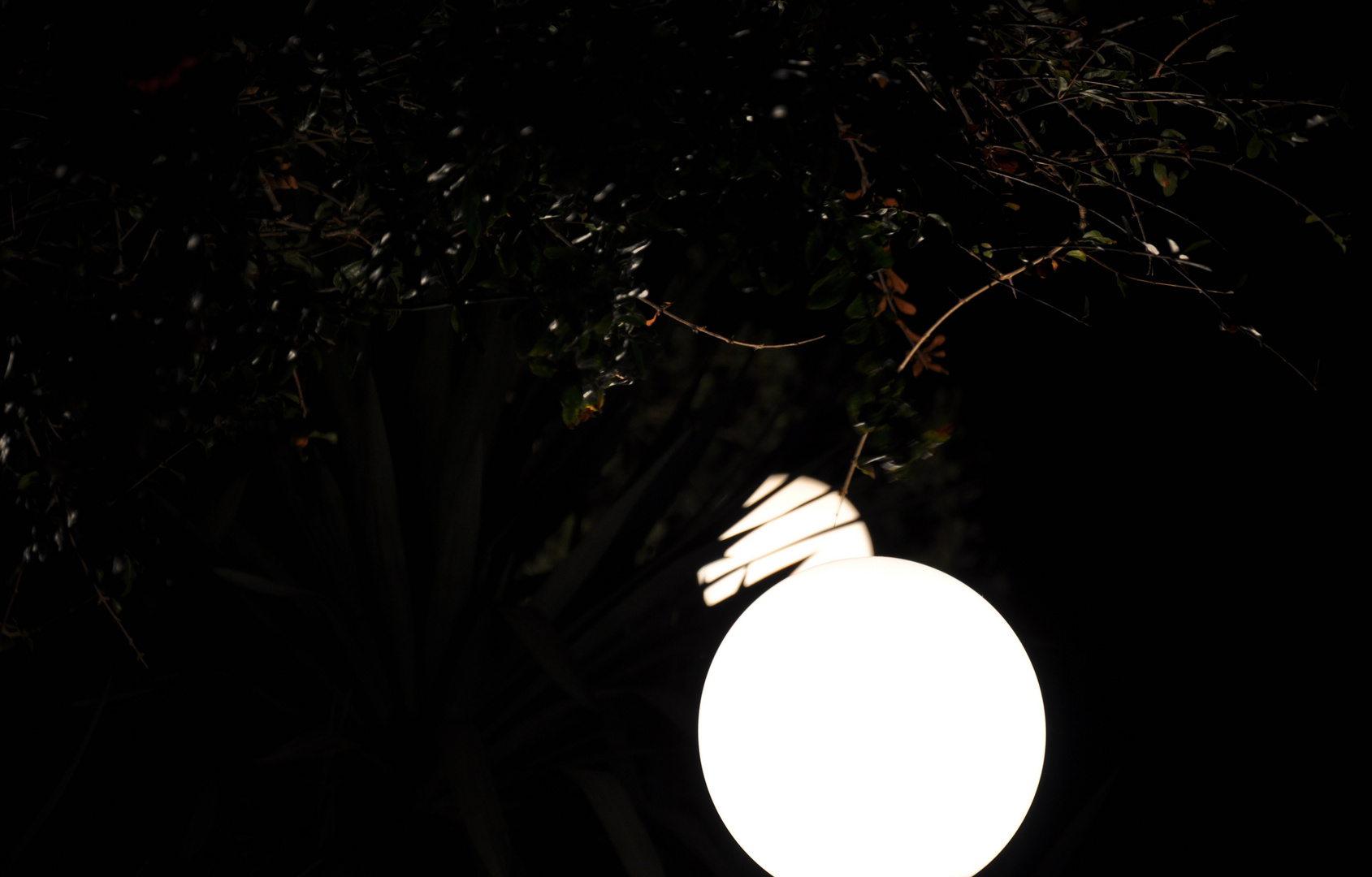Lune in Giardino