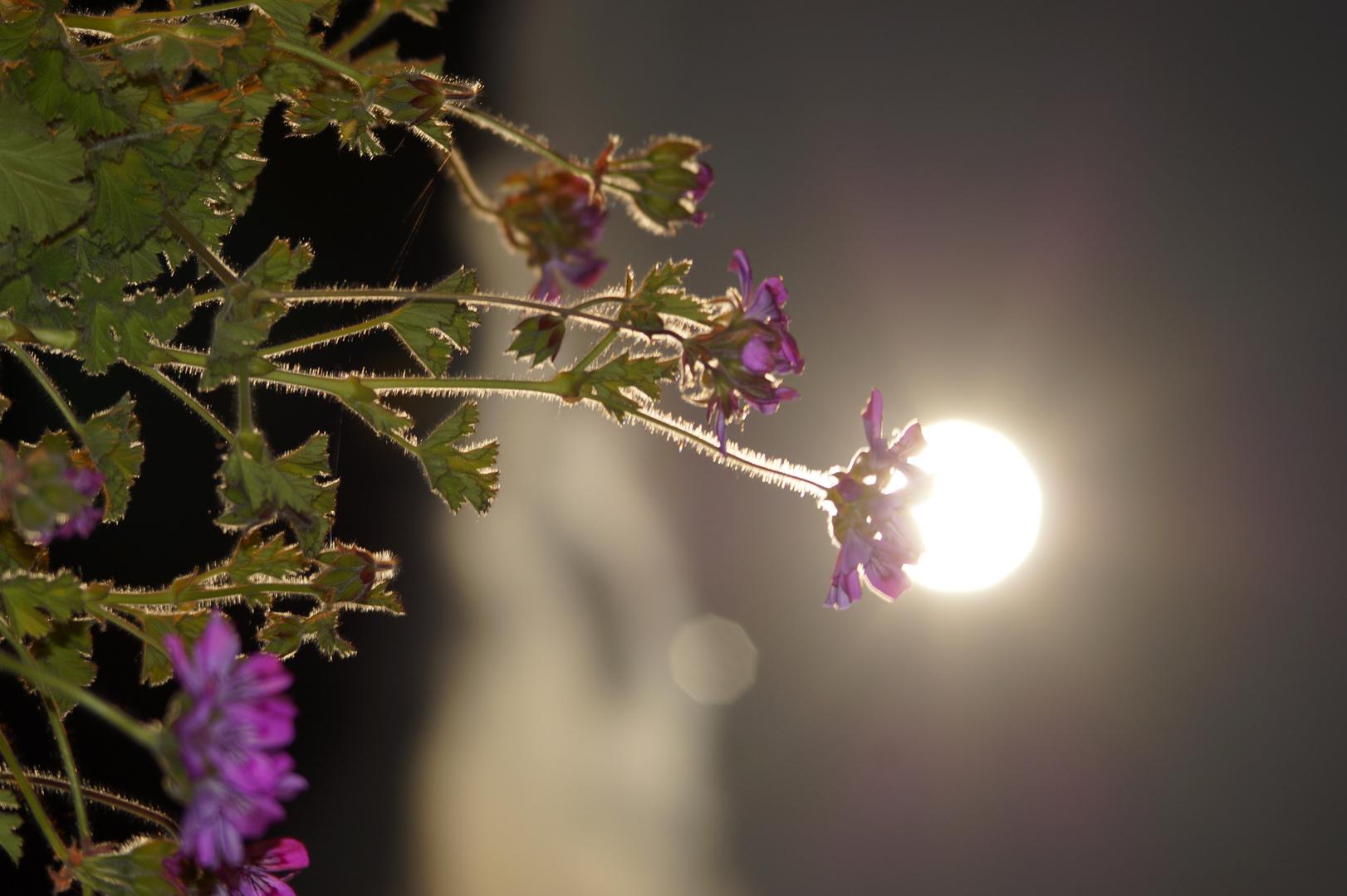 lune légére