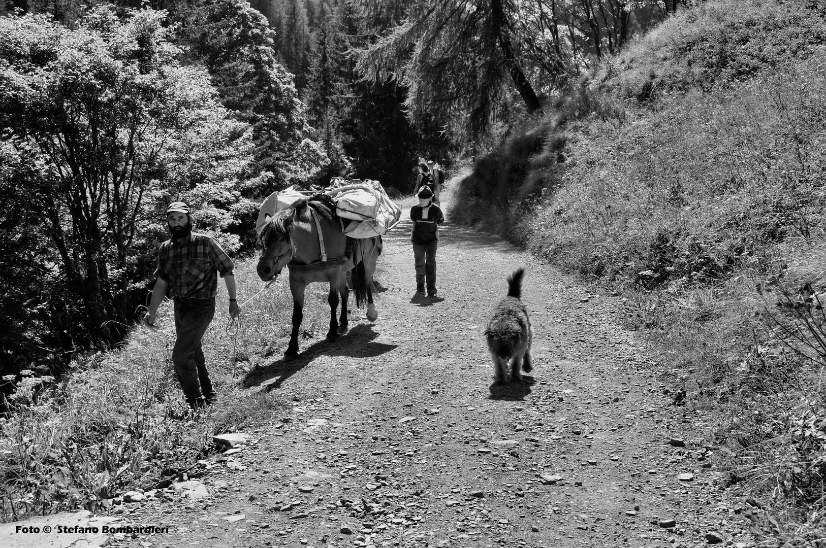 lungo gli alpeggi della Valle Brembana . . .