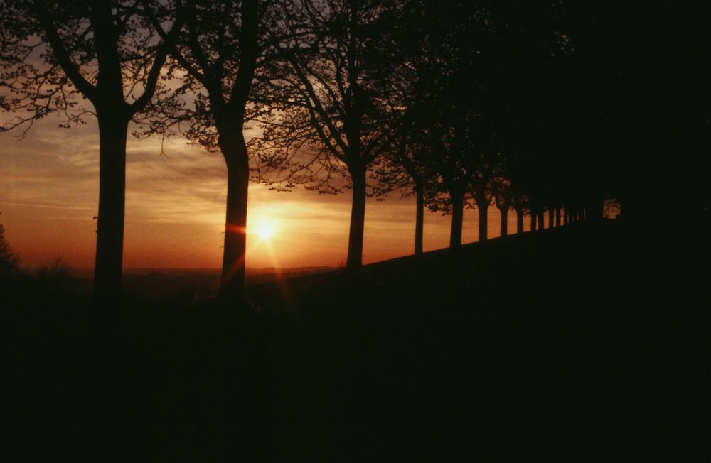Lungo il viale del tramonto.........