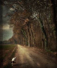 Lungo il viale delle querce