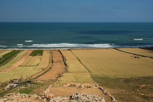 Lungo la strada, Campi in riva al mare - On the road, fields by the sea