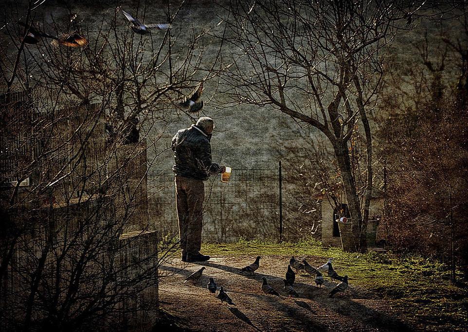L'uomo che parla ai piccioni
