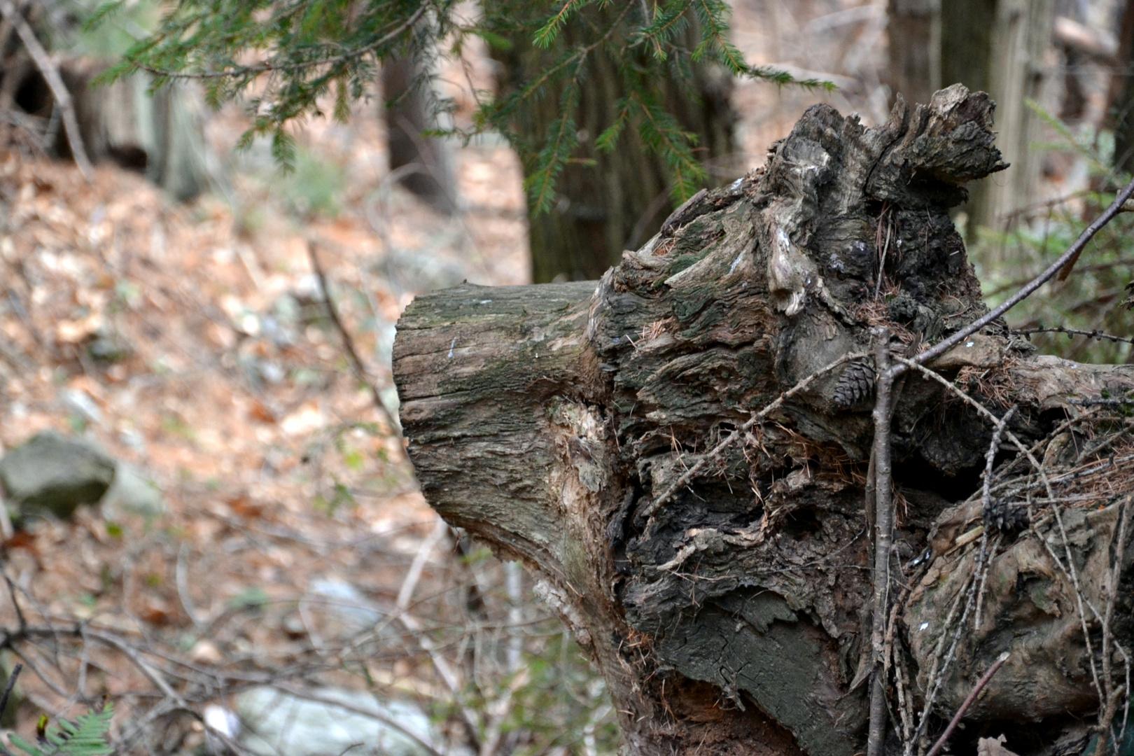 Lupo di legno