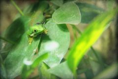 Lurchi mag es grün...
