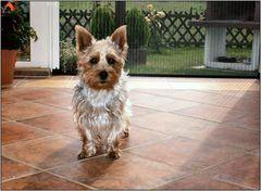Lussie, der Liebling unserer Bekannten
