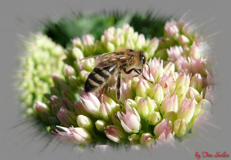 Lust auf Honig?