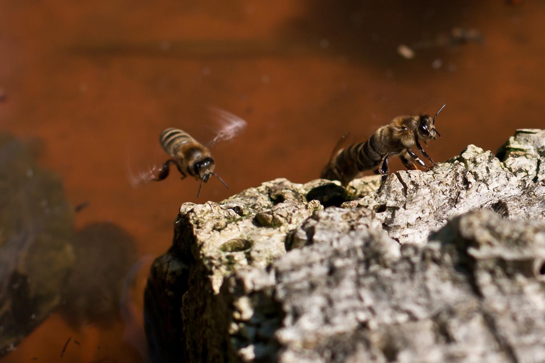 Lustige Bienen