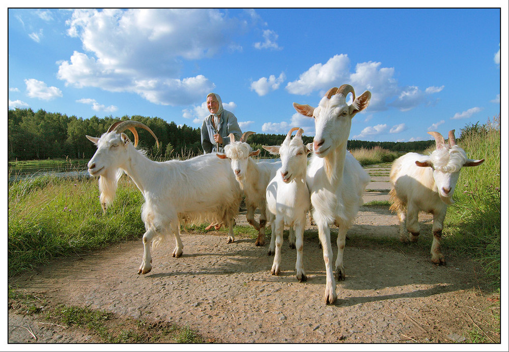 Lustige Familie Foto Bild Archiv Projekte Naturchannel