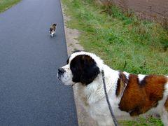 °°° Lutzy warte - Wir drehen um - Bei dem Wetter jocht man ja keinen °°°