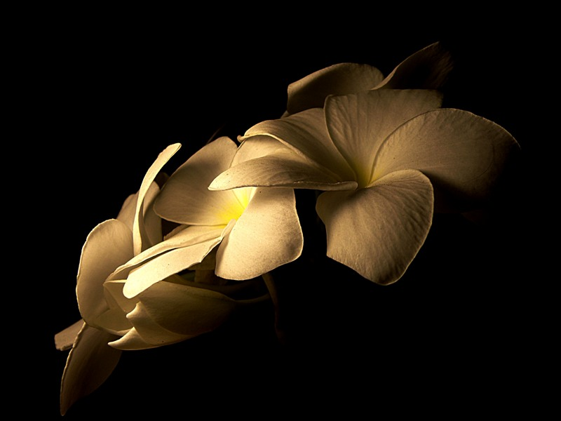 Luz Amarilla