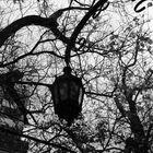 Luz en blanco y negro
