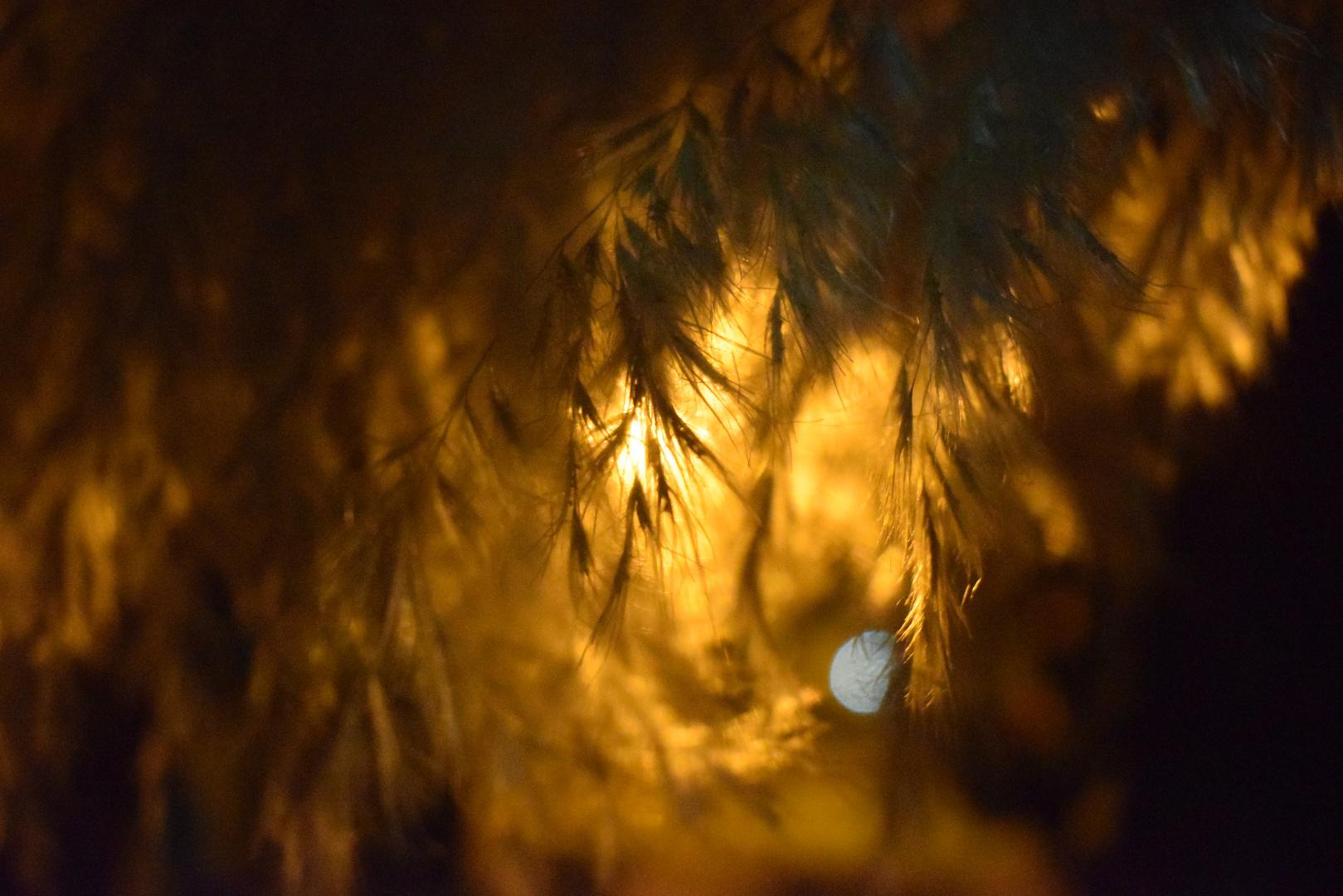 Luz en los albores !