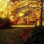 Luz y bosque...